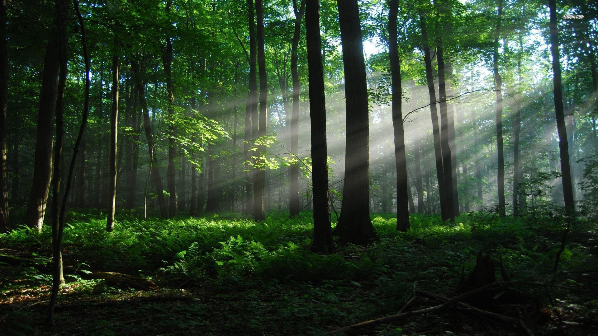woods-wallpaper1